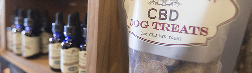 what-you-need-to-know-about-cbd-and-pets