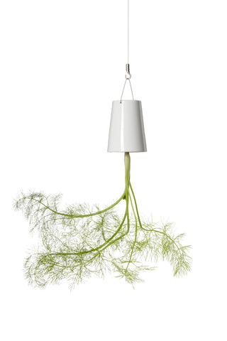 Sky Planter - Fenchel