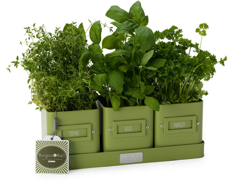 Herb Pots In A Tray | Burgon & Ball