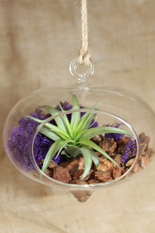 Heart Shaped Terrarium with Air Plant, Orchid Bark & Reindeer Moss
