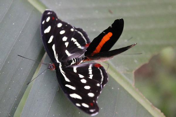 Amazon, Ecuador