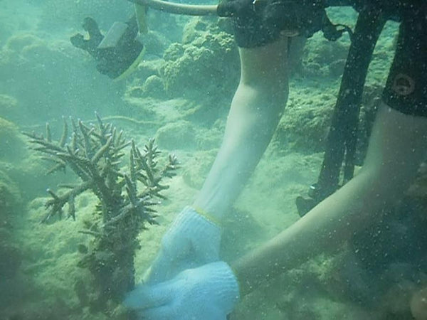 Coral & giant clam conservation