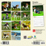 Beagles 2019 Mini Wall Calendar