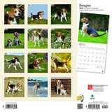 Beagles 2019 Wall Calendar