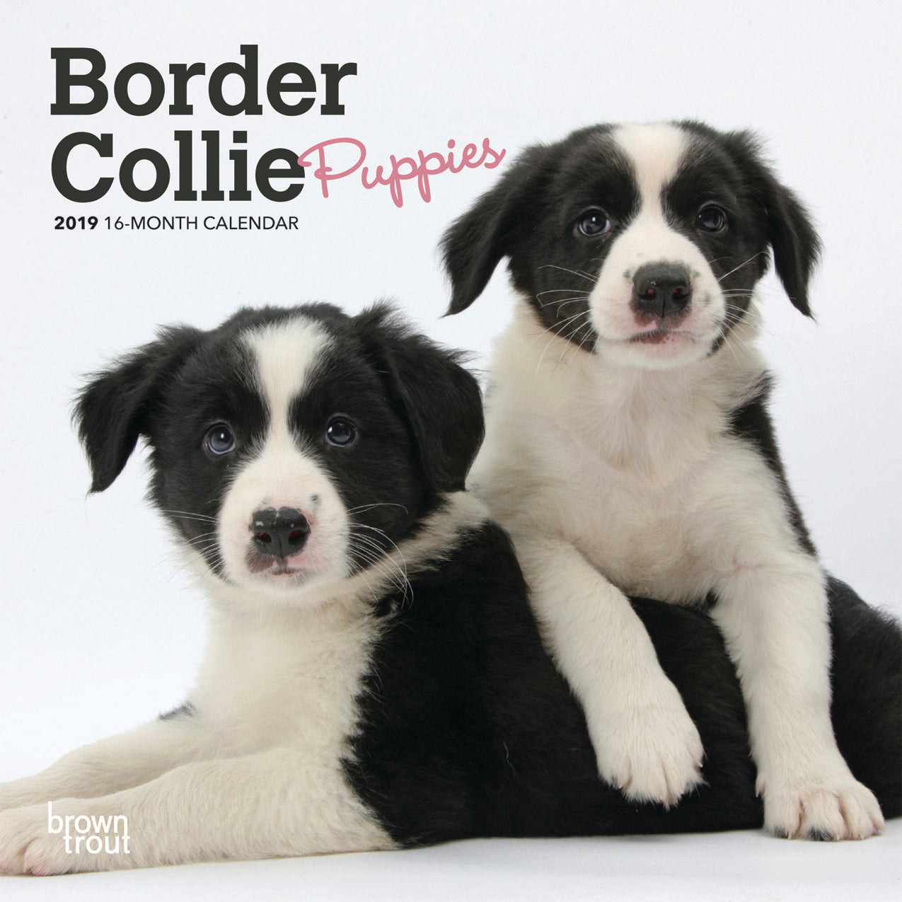 Border Collie Puppies 2019 Mini Wall Calendar