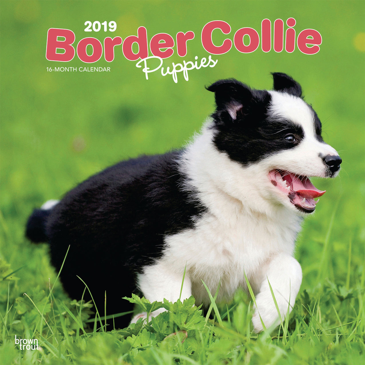 Border Collie Puppies 2019 Wall Calendar