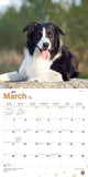 Border Collies 2019 Wall Calendar