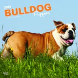 Bulldog Puppies 2019 Wall Calendar