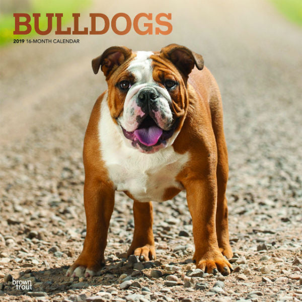 Bulldogs 2019 Wall Calendar