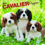 Cavalier King Charles Spaniel Puppies 2019 Wall Calendar