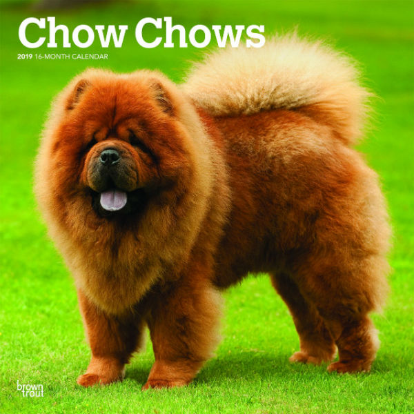 Chow Chows 2019 Wall Calendar