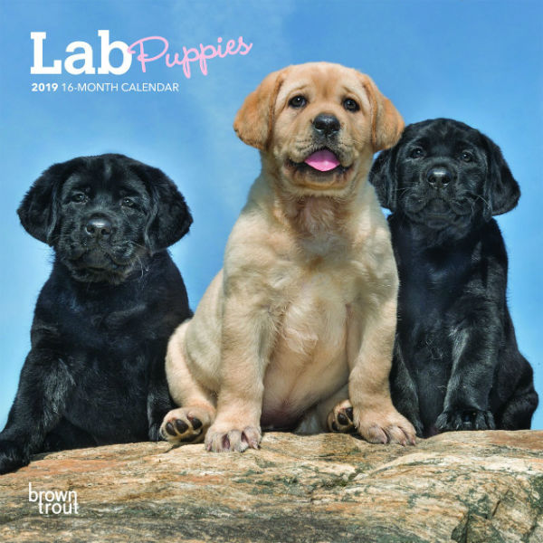 Labrador Retriever Puppies 2019 Mini Wall Calendar