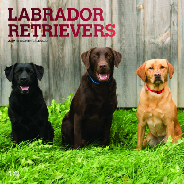 Labrador Retrievers 2019 Wall Calendar