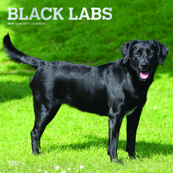 Black Labrador Retrievers 2019 Wall Calendar