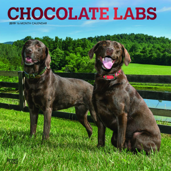 Chocolate Labrador Retrievers 2019 Wall Calendar