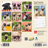 Pug Puppies 2019 Mini Wall Calendar