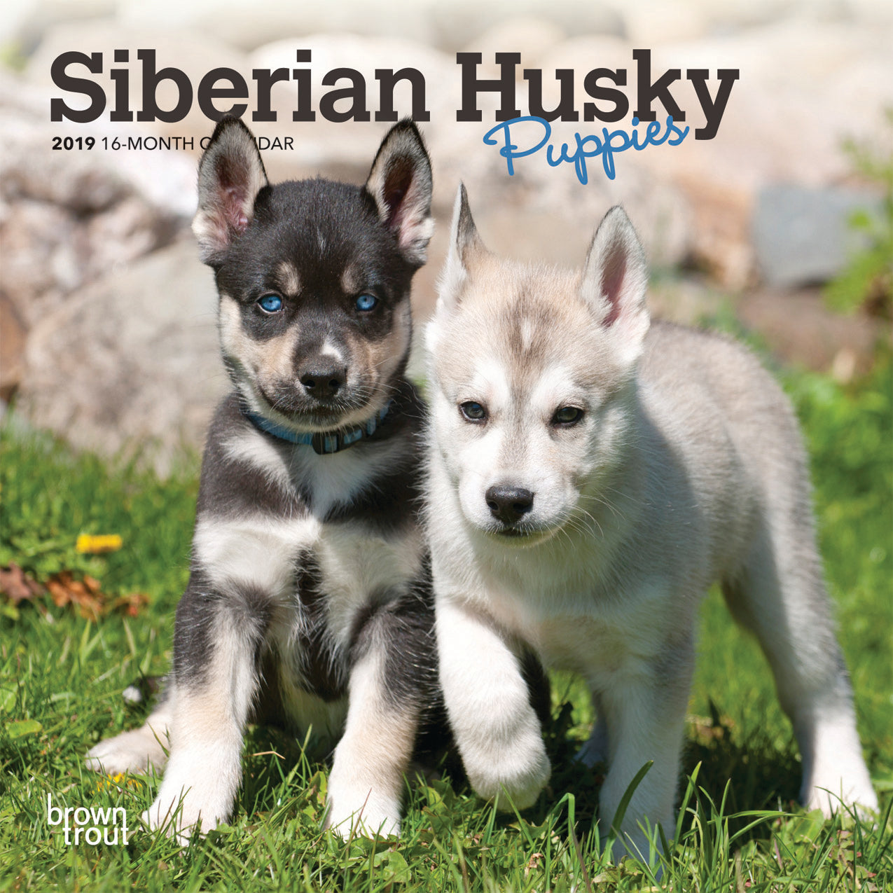 Siberian Husky Puppies 2019 Mini Wall Calendar