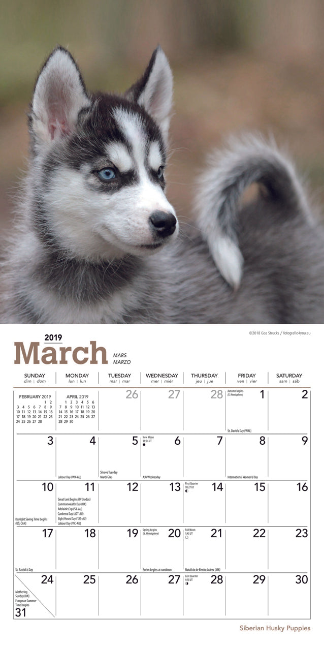 Siberian Husky Puppies 2019 Mini Wall Calendar Feeds A Dog For 3