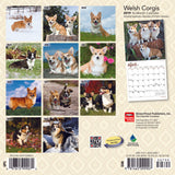 Welsh Corgis 2019 Mini Wall Calendar