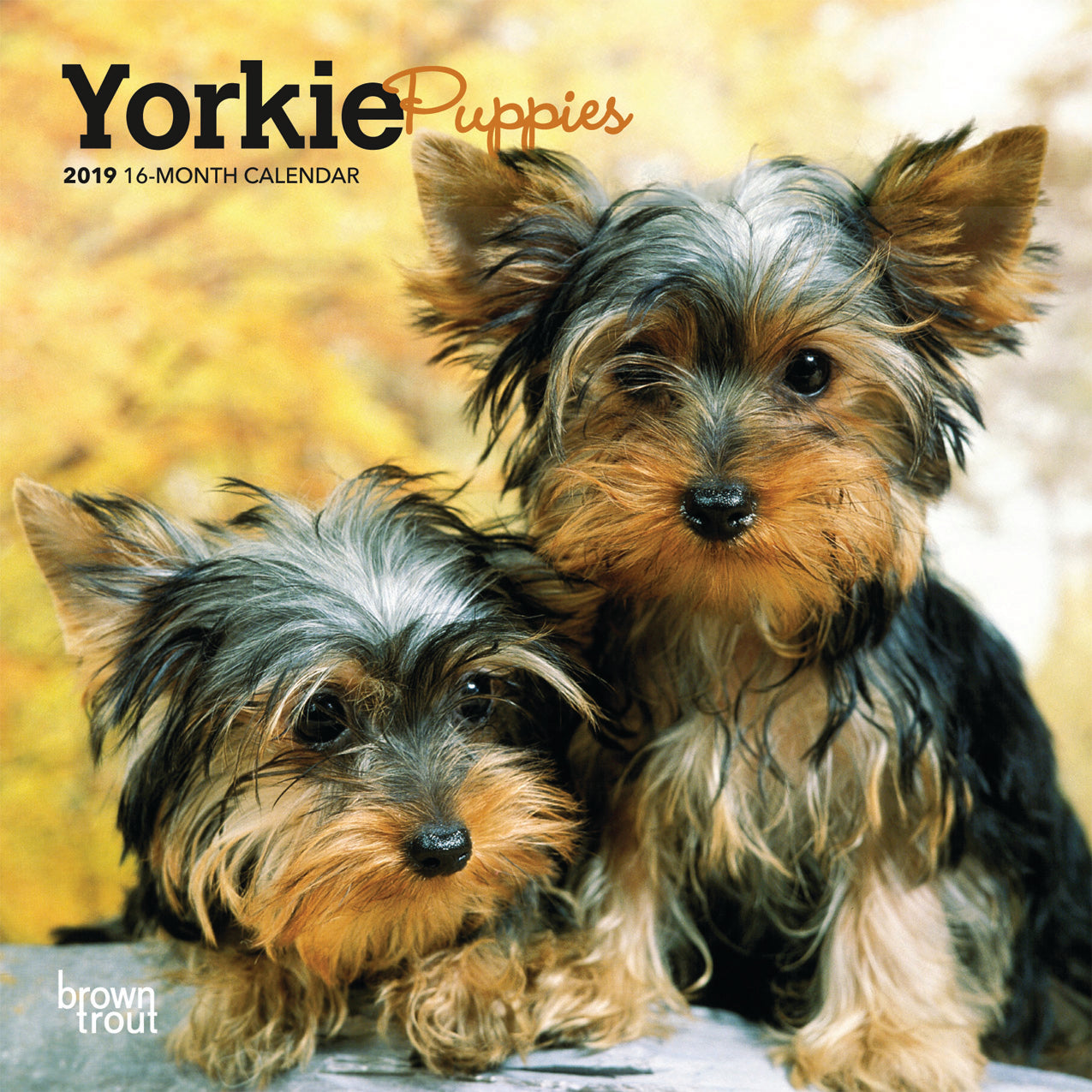 Yorkie Puppies 2019 Mini Wall Calendar