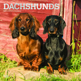 Dachshunds 2019 Wall Calendar