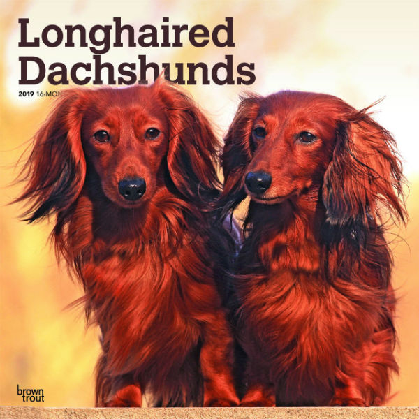 Longhaired Dachshunds 2019 Wall Calendar