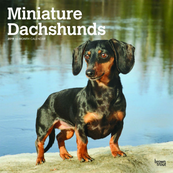 Miniature Dachshunds 2019 Wall Calendar