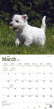 West Highland White Terrier Puppies 2019 Wall Calendar