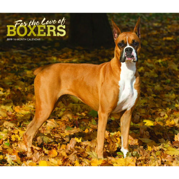 For The Love Of Boxers 2019 Deluxe Wall Calendar