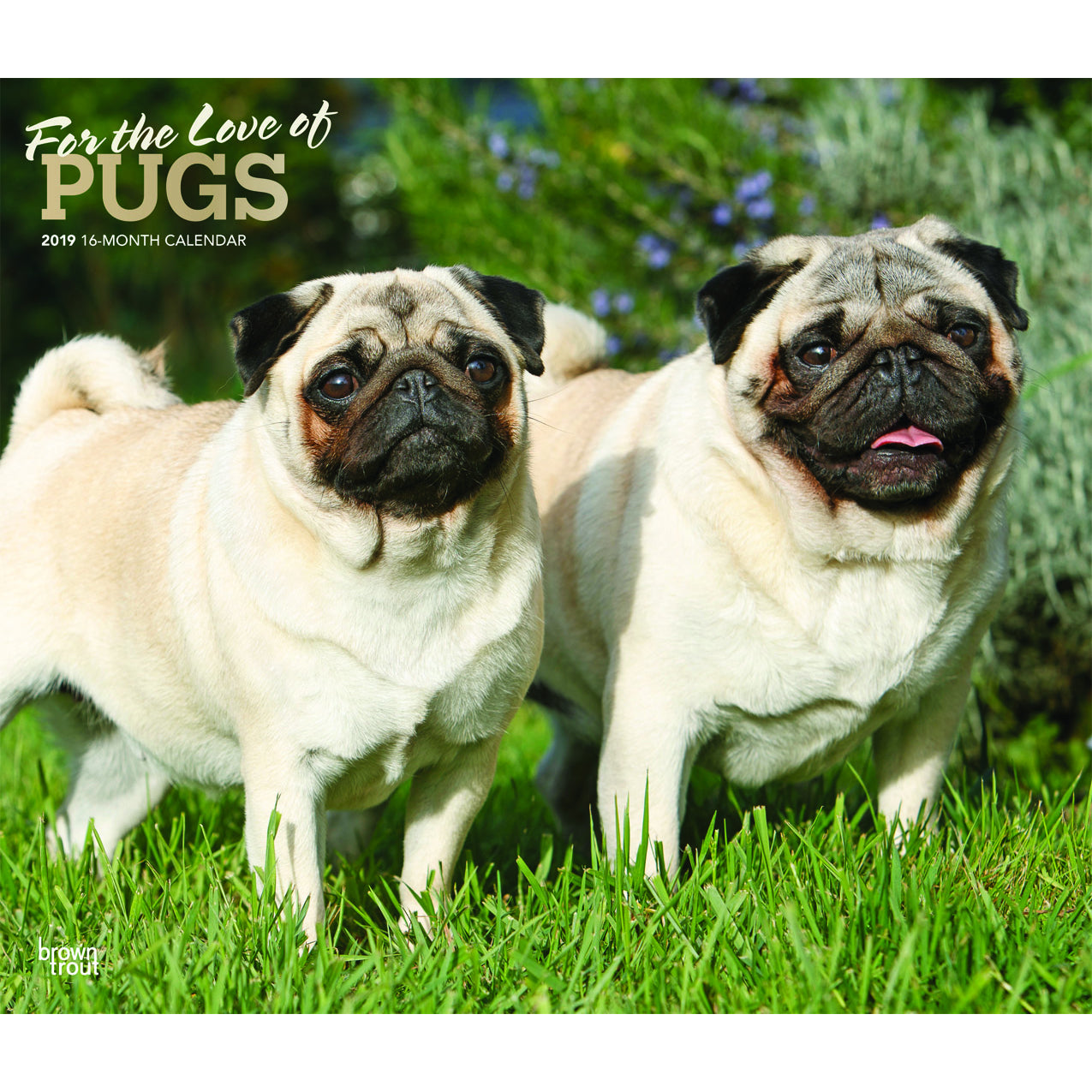 For The Love Of Pugs 2019 Deluxe Wall Calendar