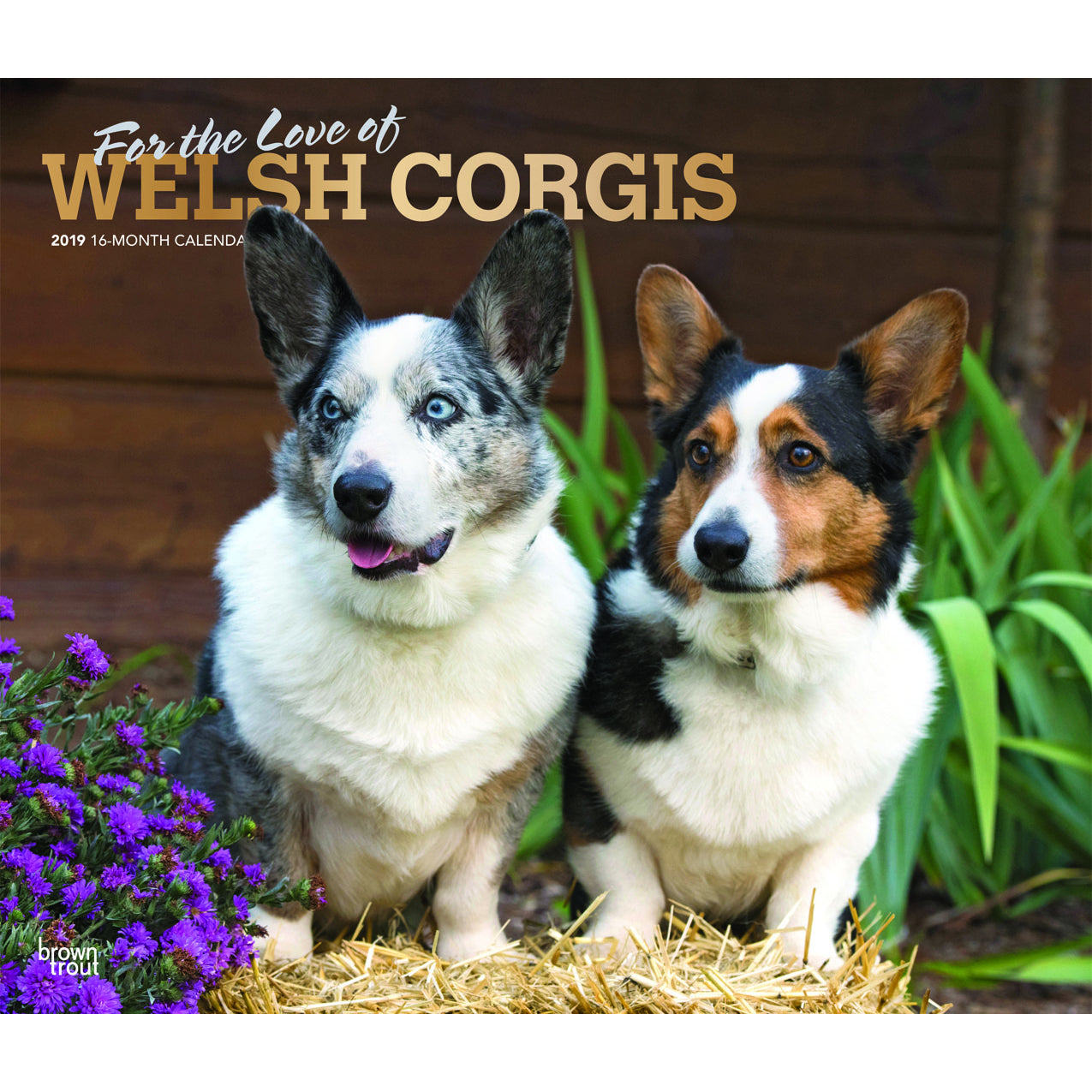 For The Love Of Pembroke Welsh Corgis 2019 Deluxe Wall Calendar