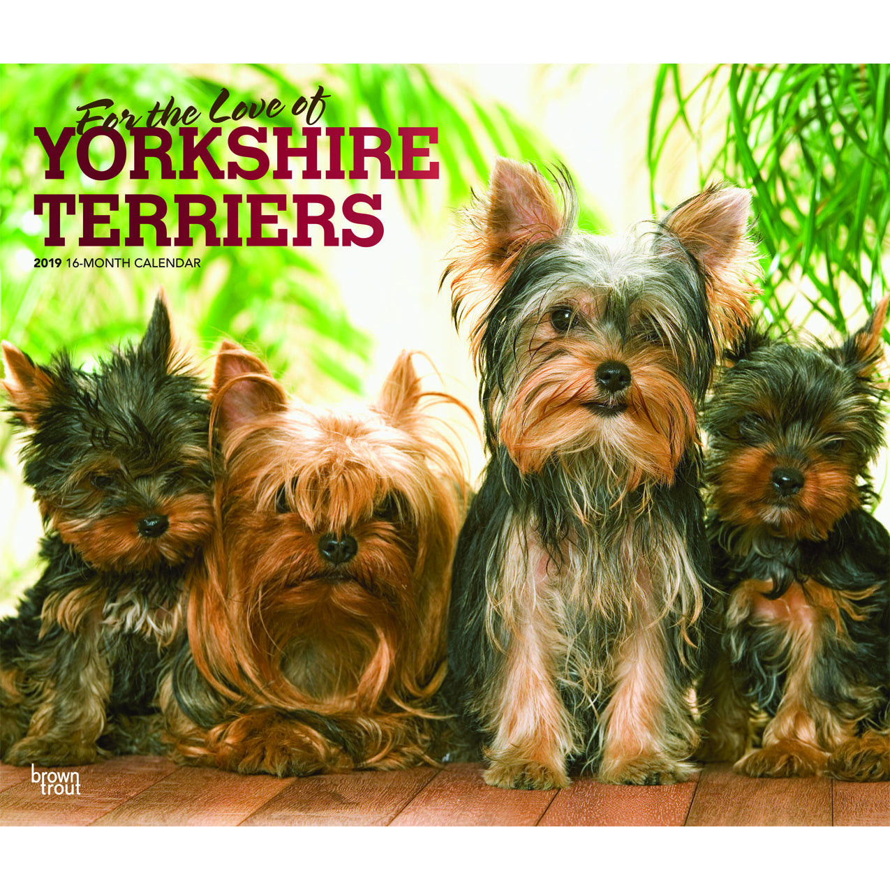 For The Love Of Yorkshire Terriers 2019 Deluxe Wall Calendar