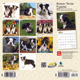 Boston Terrier Puppies 2019 Mini Wall Calendar