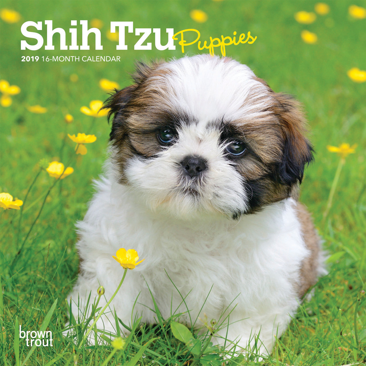 Shih Tzu Puppies 2019 Mini Wall Calendar