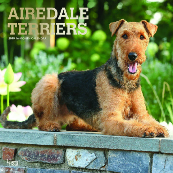 Airedale Terriers 2019 Wall Calendar