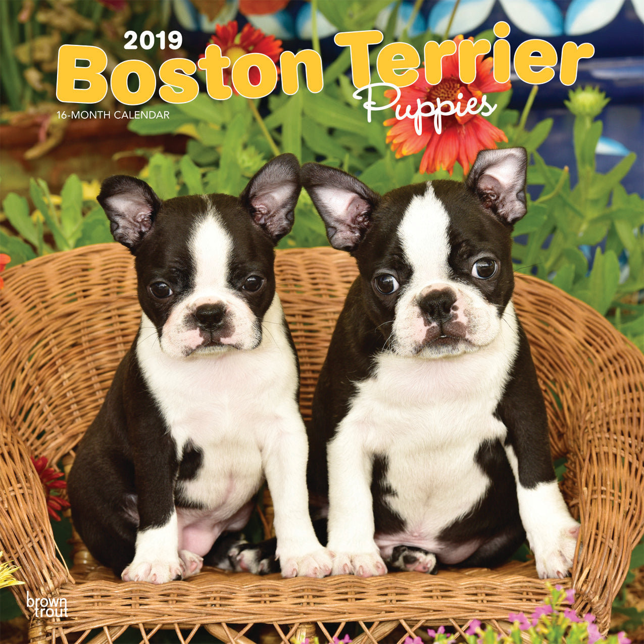 Boston Terrier Puppies 2019 Wall Calendar