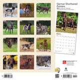 German Shorthaired Pointers 2019 Wall Calendar