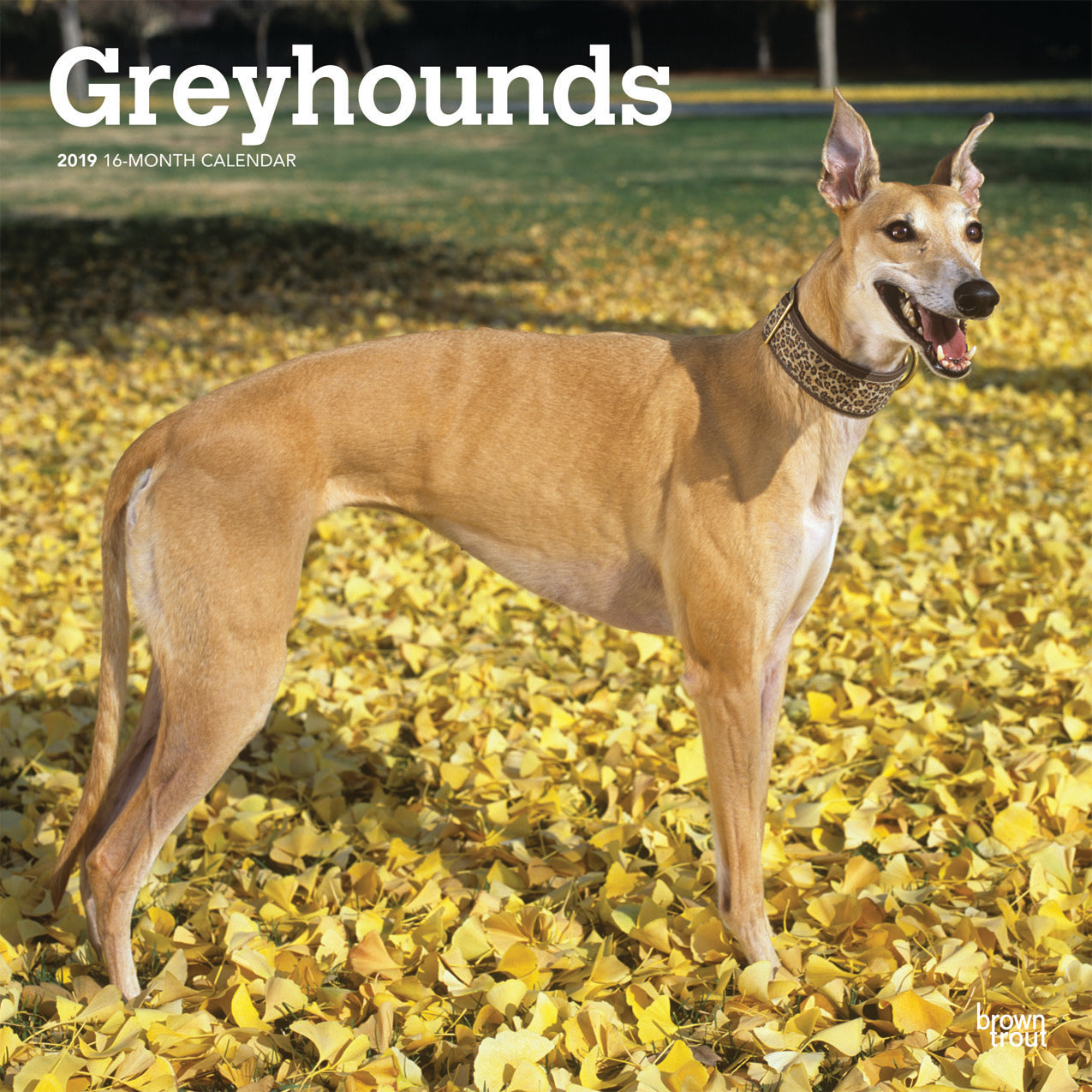 Greyhounds 2019 Wall Calendar