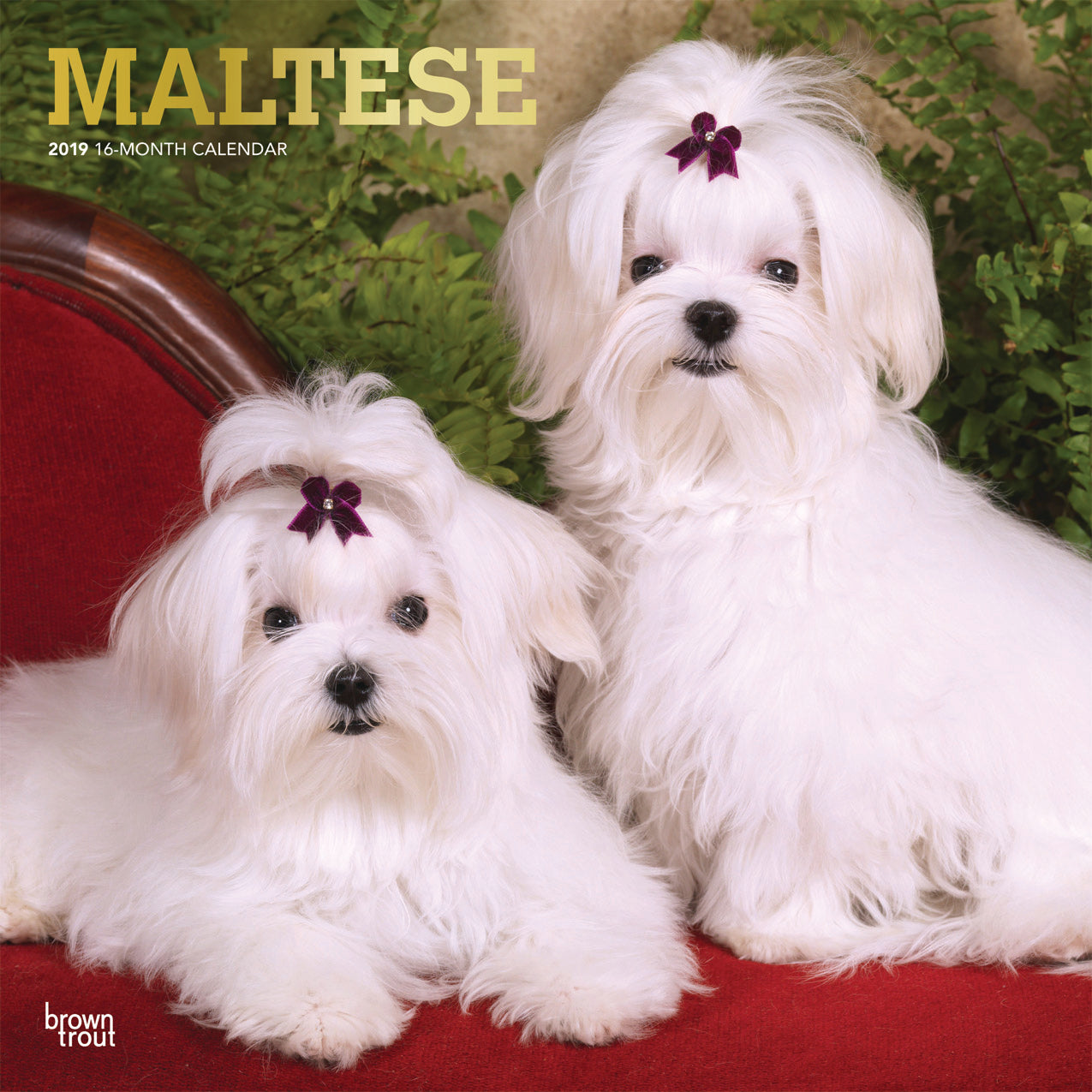 Maltese 2019 Wall Calendar Feeds A Dog For 4 Days A Dog S Love