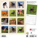 Miniature Pinschers 2019 Wall Calendar