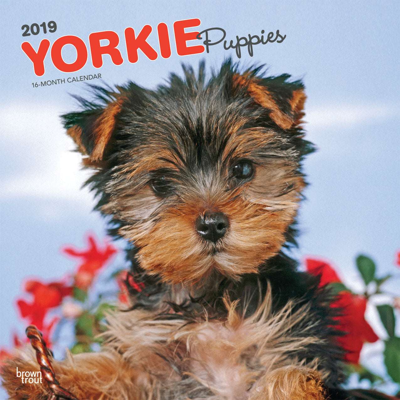 Yorkshire Terrier Puppies 2019 Wall Calendar