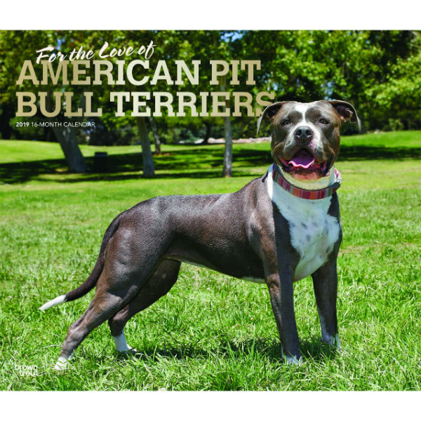 For The Love Of American Pit Bull Terriers 2019 Deluxe Wall Calendar