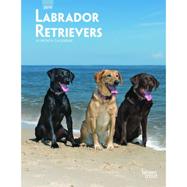 Labrador Retrievers 2019 Weekly Planner