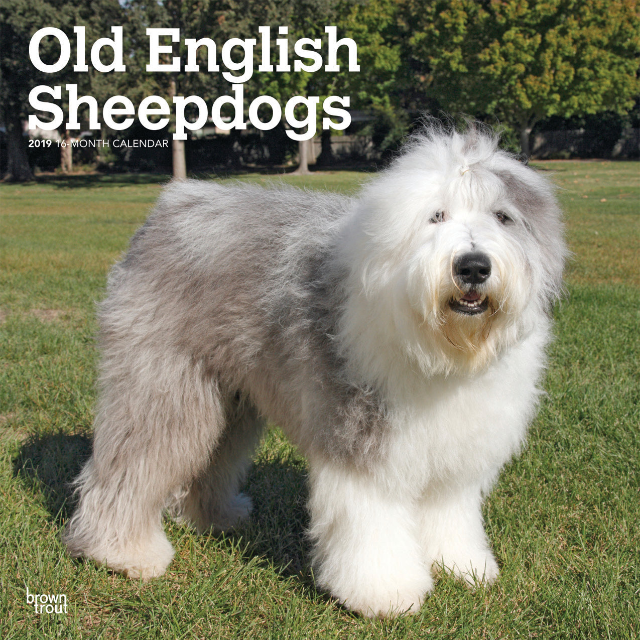 Old English Sheepdogs 2019 Wall Calendar