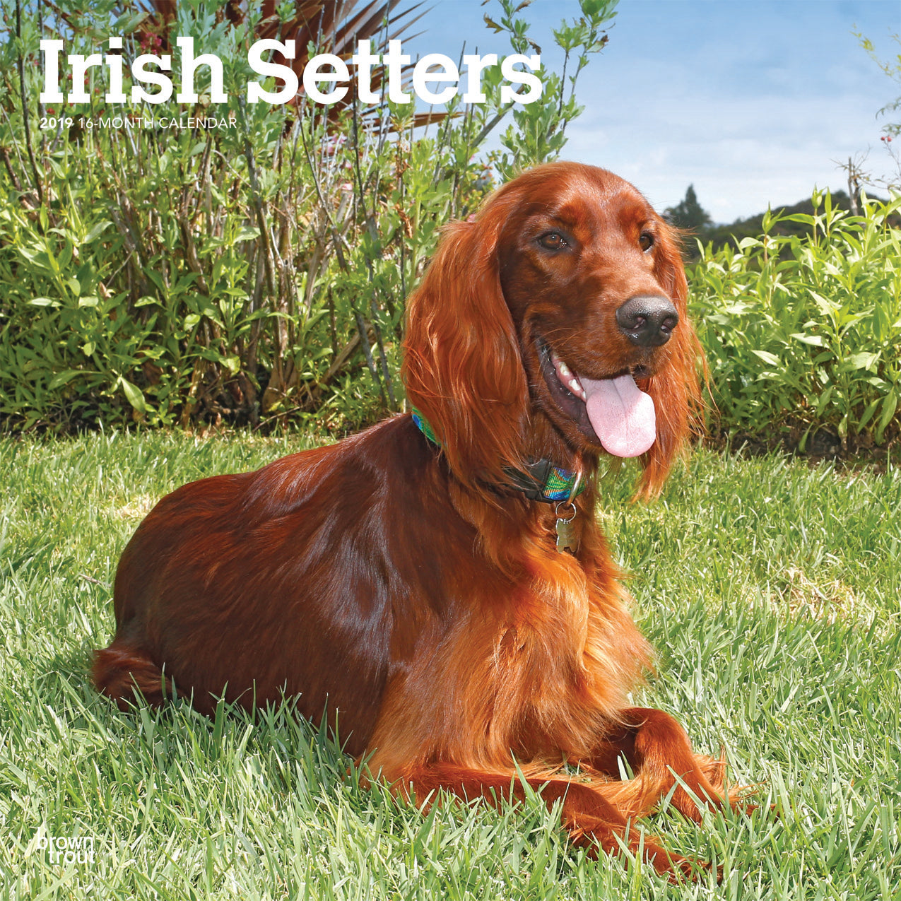 Irish Setters 2019 Wall Calendar
