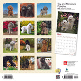 Toy And Miniature Poodles 2019 Wall Calendar