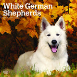 White German Shepherds 2019 Wall Calendar