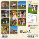Beagles 2020 Mini Wall Calendar