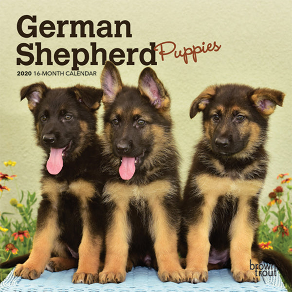 German Shepherd Puppies 2020 Mini Wall Calendar