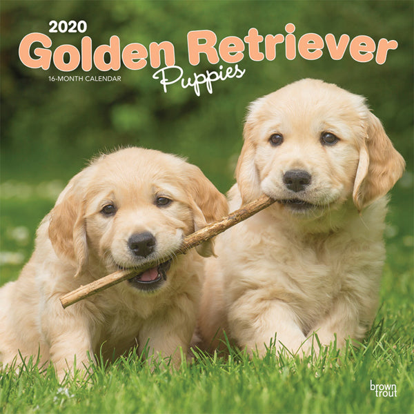 Golden Retriever Puppies 2020 Wall Calendar